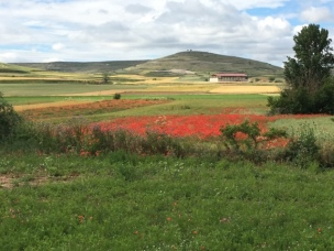 The poppies kept me company for many kilometers.